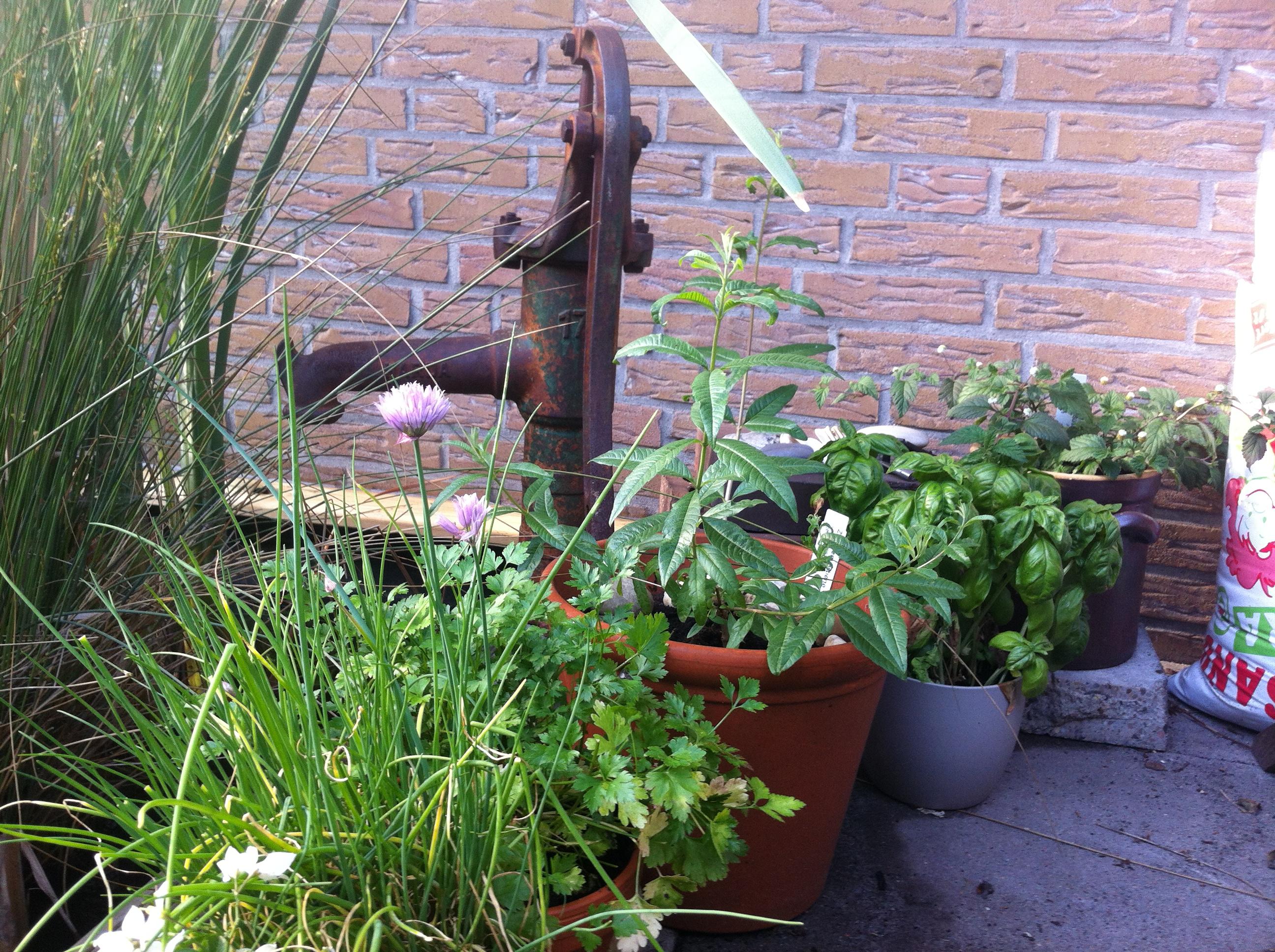Schön im Garten!