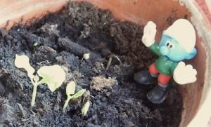 Gärtnerschlumpf bei der Arbeit, endlich läßt sich das Mädchenauge sehen