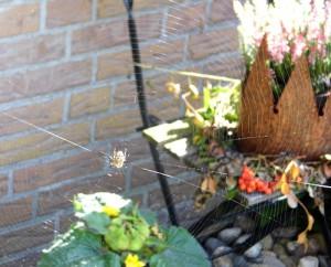 Auch Spinnen finden in meinem Garten ein zu Hause... Wenn auch nicht für immer...