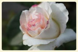 201-06-01 18_Fotor