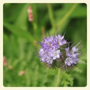 Blume I_Fotor