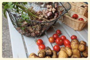 Tomaten, Kartoffeln, Pastinaken, Topinambur