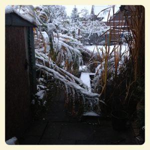 unser Garten November 2016